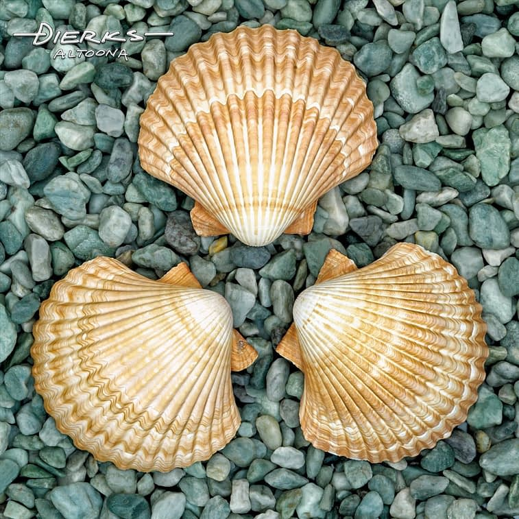Sea shells in symmetery on a green rock background.