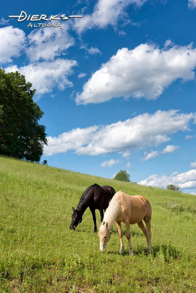 Horses grazing on a sunlit summer pasture on a hillside in Pennsylvania.