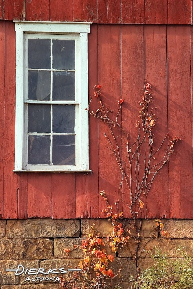 White window in red barn close up, poison oak grows up the side.