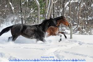 digital February 2018 calendar featuring horses running through the snow