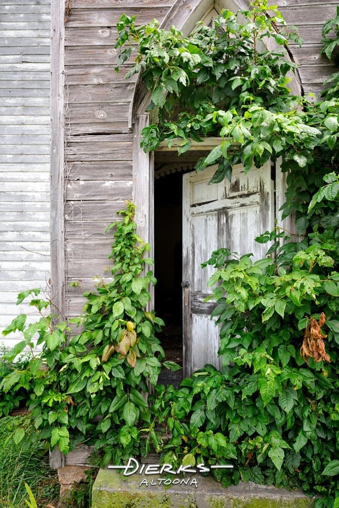 An abandoned country church door stand open and covered in poison ivy.