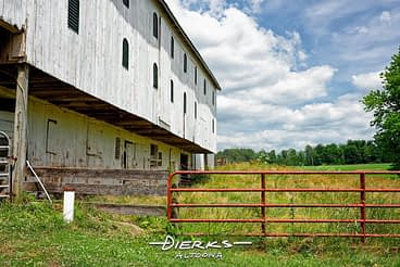 An overgrown summer barnyard behind a white barn with the red gate swung shut.