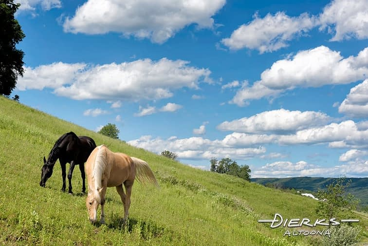 Horse grazing a summer pasture on slanted hillside in Pennsylvania.