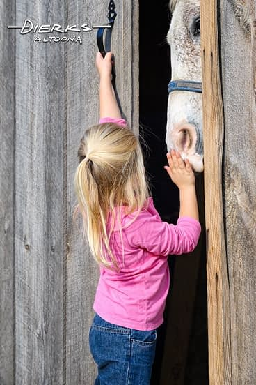 Cute little girl putting away horse at the barn door.
