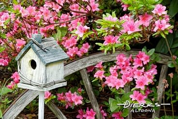 Azaleas and a weathered birdhouse in a Spring garden filled with color.