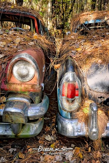 Two junk cars in the woods covered in pine needles and leaves, old school 1956 Mercury relics.