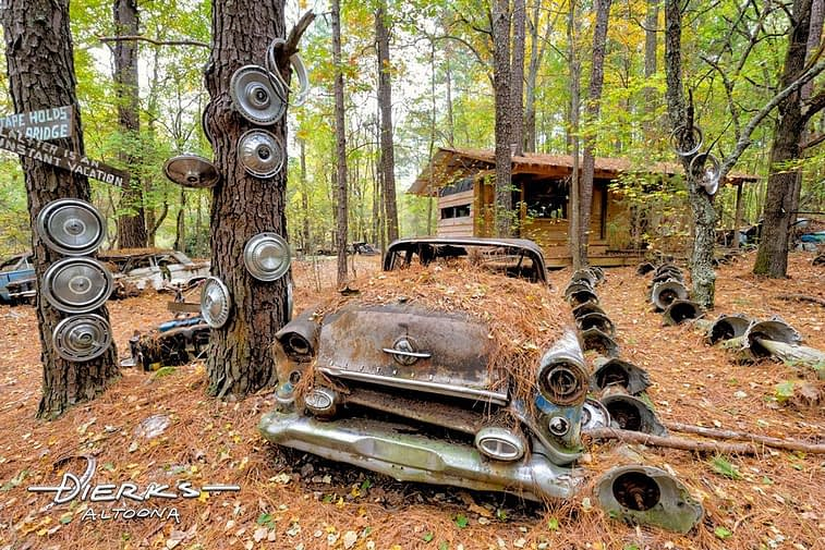 An old car in the junkyard under pine needles and trees, a 1954 Oldsmobile.