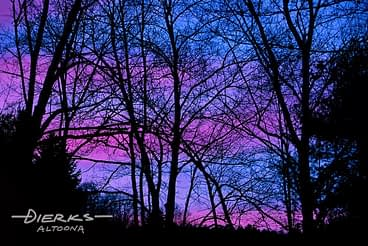 The dramatic sky of a Spring sunet in pink and blue against trees in silhouette.